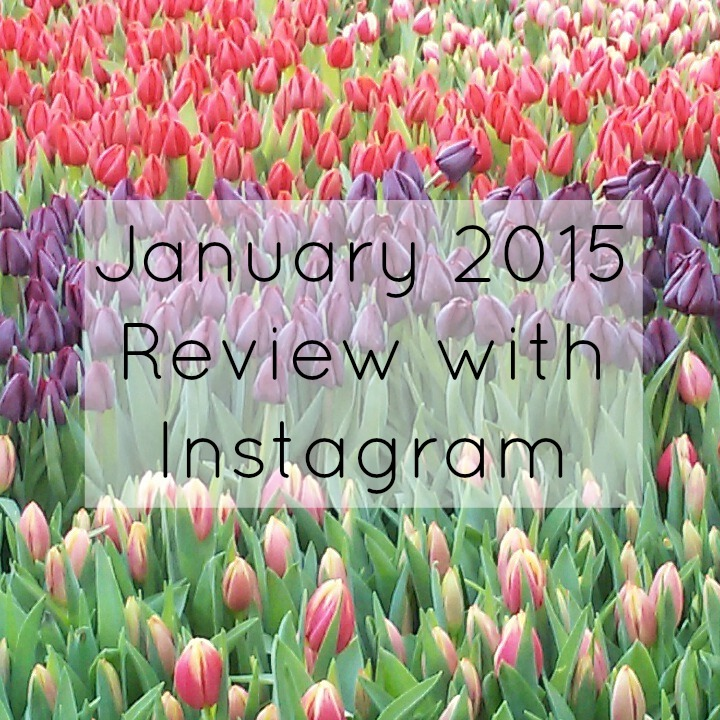 January Instagram Review