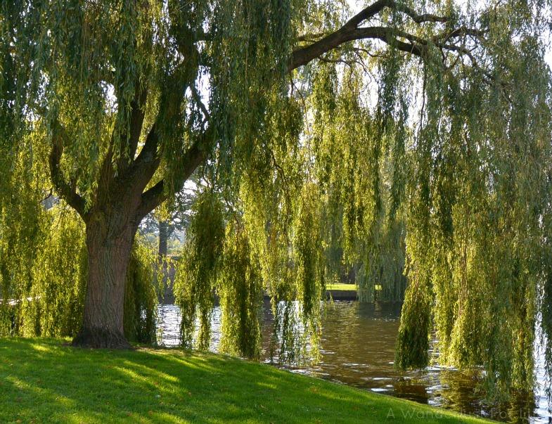 Park in Leiden