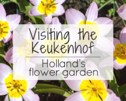 Visiting the Keukenhof – Holland's flower garden