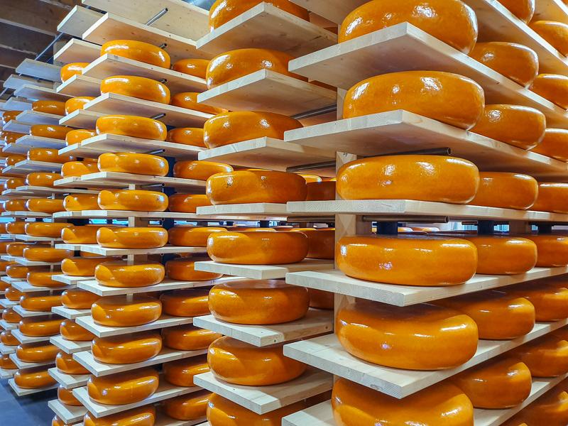 Racks of cheese in Woerden