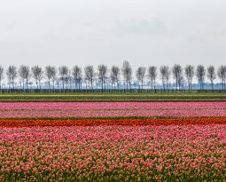 5 ways to explore Laag Holland (in North Holland)