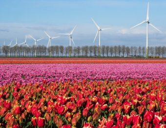 The Ultimate tulip guide: How to see the tulip fields in the Netherlands