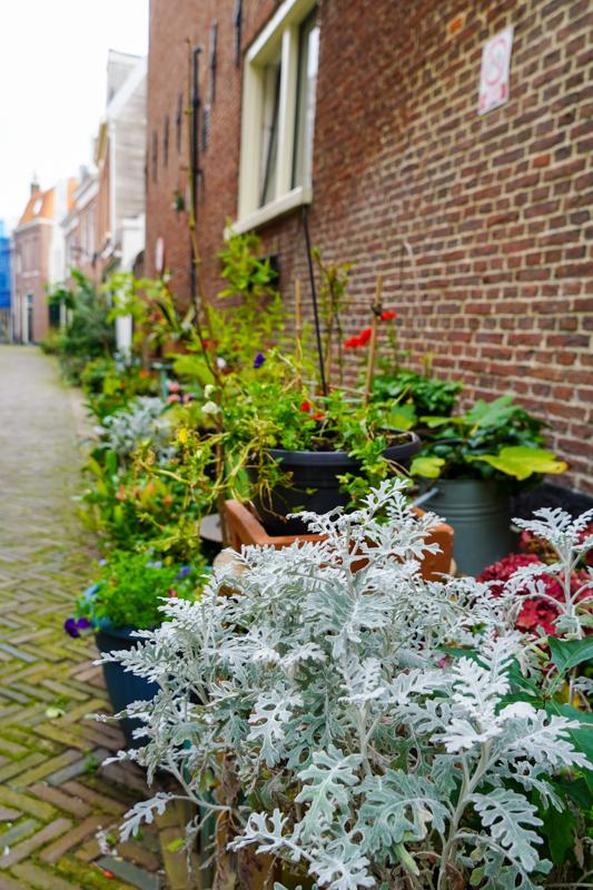 Plants in Haarlem