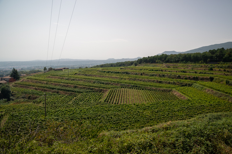 View of vineyards